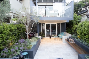 A family garden in inner west Sydney with sea lavender