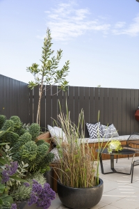 Sea Lavender features in this sunny rooftop garden in Randwick